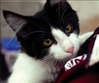 Catapalooza reminds that Fall is kitten time; consider adoption