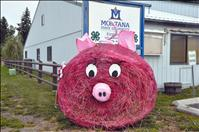 Harvest Fest hay bale winners announced