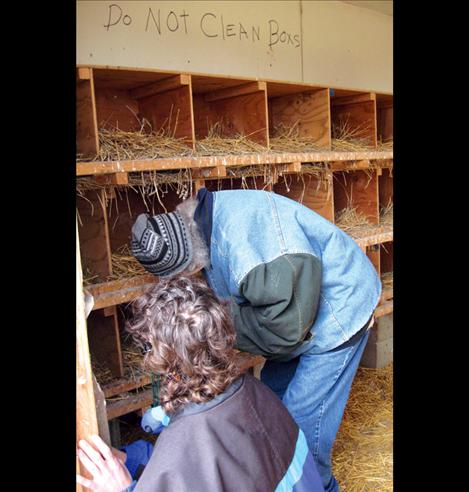 A care farm guest gathers eggs. Care farms are one way farmers and ranchers can diversify.