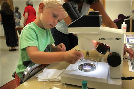 Finn Goddard looks at stoneflies under a microscope during the Flathead Lake Biological Station's open house on Aug. 5.