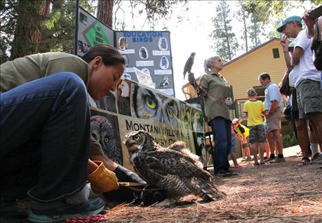 Several rescued raptors from the Montana Wild Wings Recovery Center were introduced to the public as education ambassadors during the Flathead Lake Biological Station open house. Bentley, a Great Horned Owl, is the raptor Wild Wings has had under their care for the longest time.