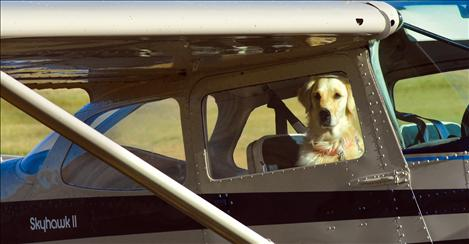 A yellow labrador retriever sits in the plane of Fred Hasskamp from Hamilton