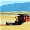 Grain harvesting season is winding down, leaving golden stubble and fat bales of hay.
