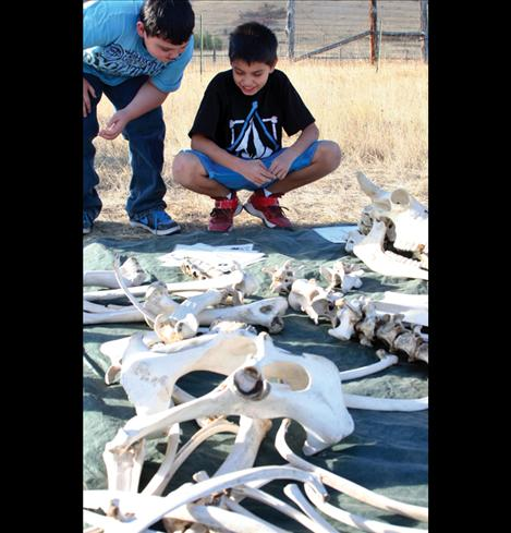 Visiting students check out bison bones.