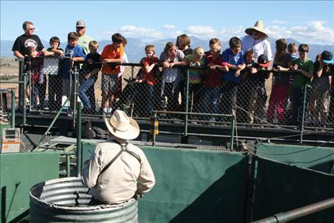 Students and teachers watch as National Bison Range workers sort and test bison.