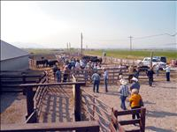 Local ranches featured on Angus tour
