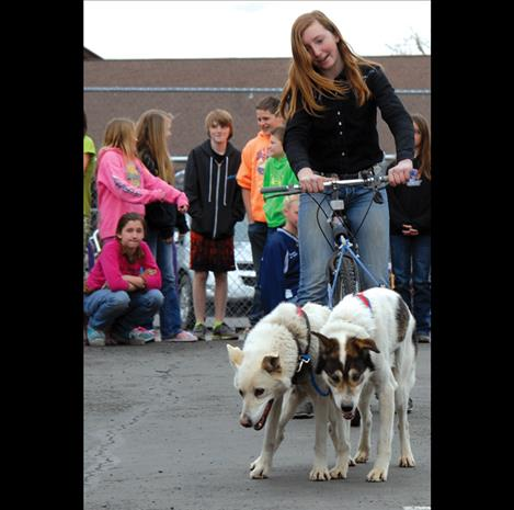 Charmayne Morrison  harnesses her dogs Spritey, left,  and Deluxe to demonstrate  mushing.