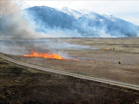 Prescribed burning around Kicking Horse each spring helps create and maintain healthy wildlife habitat.