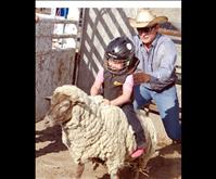 Mutton busters begin rodeo careers