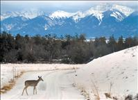 Experience wonder of winter at bison range