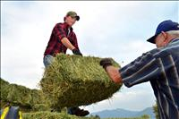 Hay auction helps  fund tractor