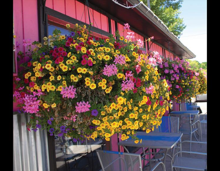 Best blooming business winner is Betty's Diner owned by Johna and Dan Morrison.  With big blooming baskets of flowers that match and contrast with the pink paint, Betty's Diner won best blooming business.  Johna Morrison said she's had customers tell her they come into the restaurant because of all the flowers.