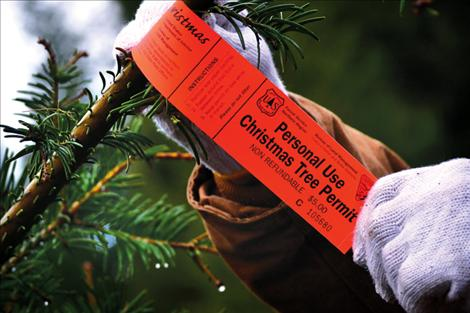 Permits to cut Christmas trees on national forest land are available for just $5 per tree, with a limit of two per household.