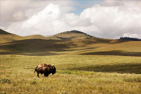 Confederated Salish and Kootenai Tribes seek comment on the proposed Bison Range transfer.