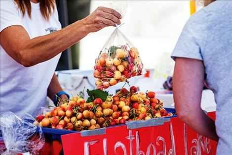 Rainier cherries ripened just in time for the annual Polson Main Street Flathead Cherry Festival.