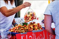 Cherry festival stems from family tradition