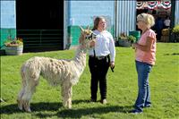 Lake County Fair Grand and Reserve Results