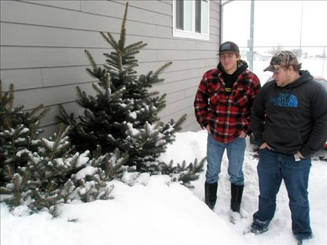 Polson High seniors Bryce Henning and Justin Young recently helped deliver blue spruce Christmas trees to local families.