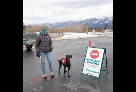 Deb Tirmenstein of Frenchtown had her black Labrador Ismay at an inspection station at Salish Kootenai College on Friday. The dog iis trained to detect aquatic invasive species.