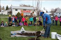 'Seeds of peace' grow into tree for school
