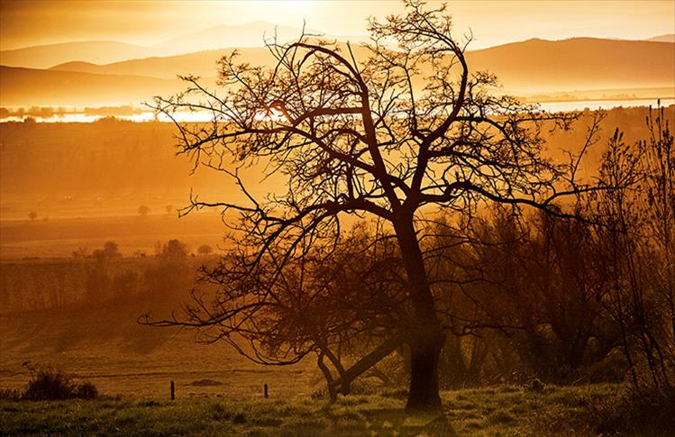 Silhouetted against the setting sun's golden glow, a newly blooming tree seems to lean toward the light.