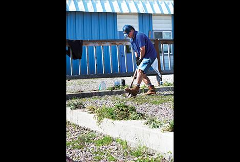 Dean  Furukawa  removes  weeds from  the Boys  and Girls  Club in  Ronan.