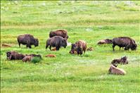 Comprehensive Conservation Plan process begins at Nat'l Bison Range