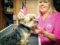 Elmo woman opens dog grooming business