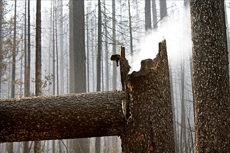 Smoke billows out of a smoldering tree trunk. Information officer Jacob Welsh said in situations like this the tree will likely smolder for days.