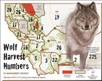 Wolf hunt ends with highest harvest yet