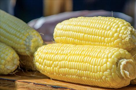 he Mission Valley FFA group in Ronan sold hundreds of ears of corn during the event.