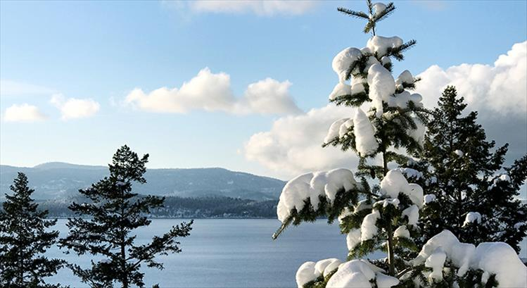 Snowy branches hang out by Flathead Lake