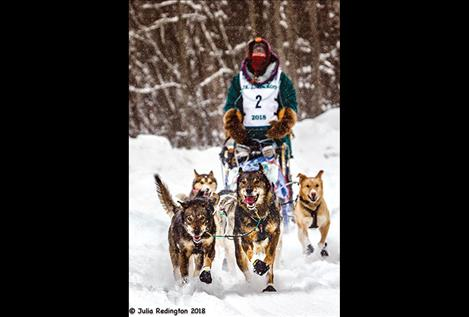 Charmayne Morrison drives her dog team near the start of the Junior Iditarod.