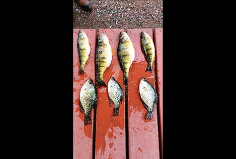 Monster perch and crappie can be caught at Finnian.