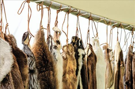 Furs are set up at one station for people to visit, reminiscent of the furs traded at the fort about 150 years ago.
