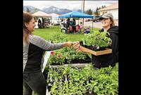 Ronan Farmers Market moves to visitor center