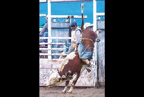 A cowboy holds on for dear life.