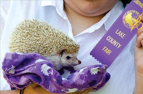 Ashlee  Peterson, 13, received a purple ribbon in the 4H pocket pet division with her hedgehog on Monday.