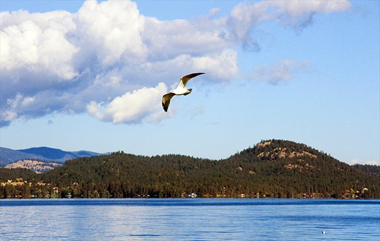 On a picture-perfect fall day, a lone seagull flies above Flathead Lake at Boettcher Park.