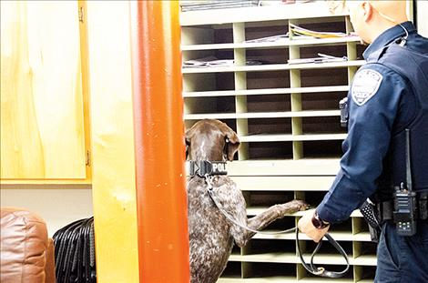Polson Police  Officer Cody  Doyle works  with Jäger as  he searches  for planted  drugs during  a training  exercise  at the  Polson Fire  Department.  Jäger moved  quickly into  the room  and found  the mark in  several places, including the  one hidden  behind a shelf full of papers.