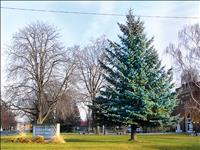 Community Christmas tree to be removed, new tree established
