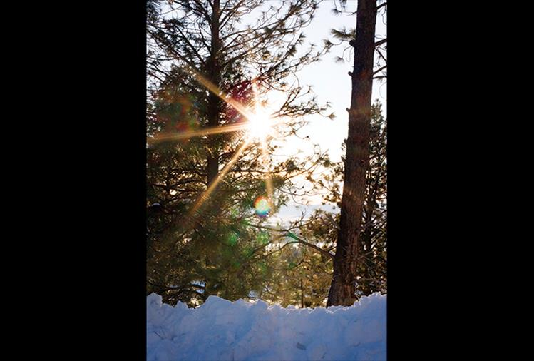 Bright and glorious, the sun shines through the trees, heralding much anticipated warmer weather.