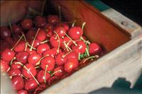 Cherry Festival time in Polson