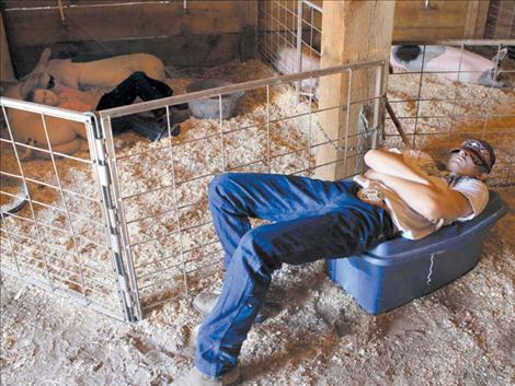 Payton Fitzpatrick, right, catches some shut-eye atop a gear bin as Haylee and Ryan Walchuck, back left, rest with their pigs.