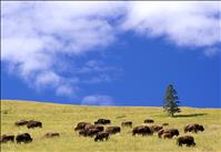 Management plan for National Bison Range announced