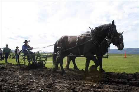 Jonathan Hostetler drives a team of draft horses, demonstrating the proper way to prepare a field for planting using horse power.