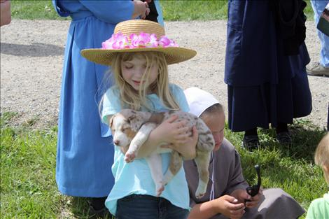 A young girl cuddles a red heeler puppy at Horse Progress Days in St. Ignatius.