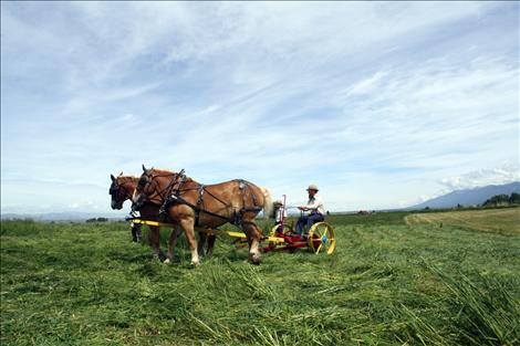 Pioneer Equipment Inc. employees demonstrate how to mow grass and hay using only horse power during Horse Progress Days in St. Ignatius.