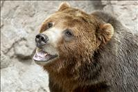 Grizzly bear advisory council struggles with 'herculean' challenge