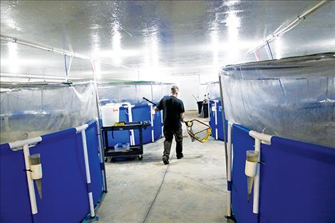 Inside the barn, six Walmart  swimming pools house thousands of shrimp in various stages of development.